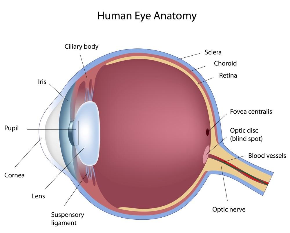 eyes eye part laser - photo #12